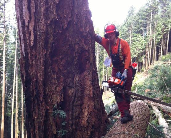 Contract Falling / Danger Tree Falling
